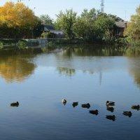 В октябре пруд с утками... :: Тамара (st.tamara)