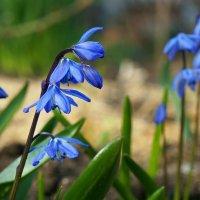 Прекрасна и чудесна весна! Пусть она всегда цветет в нашей душе!! :: Элен .