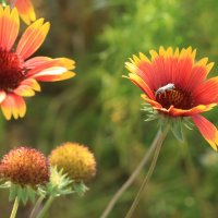 цветы :: сергей пейкер
