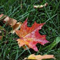 Осень :: Олеся Урюпова
