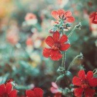 флора :: Христина Карпенко