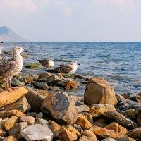 Птицы и камни... :: Елена Васильева