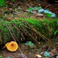 лесные истории :: Дмитрий Анцыферов