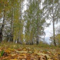 про осень :: Алексей -