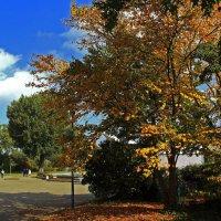 В рейнском парке :: Alexander Andronik