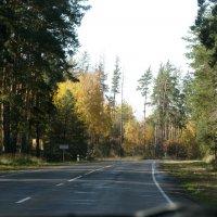 Дорога в осень... :: Михаил Болдырев