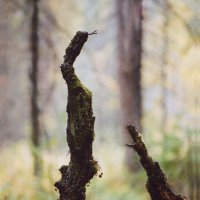 Лесные разборки :: Валерий Талашов
