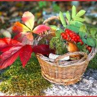 здравствуй, осень :: liudmila drake