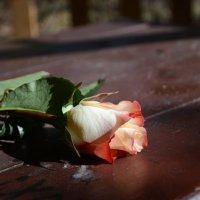 Розы покрывают всё. Даже могилы... :: Анастасия Засимова