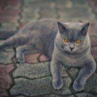 кот..... :: Татьяна Мальцева