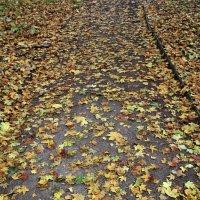 Наследила осень :: Nikolay Monahov