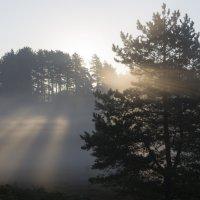солнечные лучи :: ник. петрович земцов