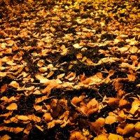Вечерняя осень :: Константин Родочинский