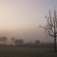 Туманное утро :: Валерия заноска