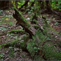 сказки нашего леса :: Дмитрий Анцыферов