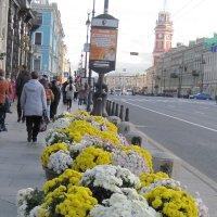 Осень в городе. Невский проспект. :: Маера Урусова