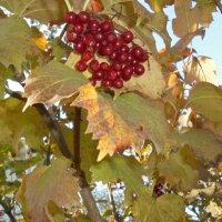 Калина и осень :: ДС 13 Митя
