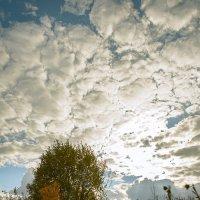 Осень :: Женя Лузгин