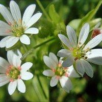 Где трава всего сочнее, отыщи тростинку-фею... :: Нина Корешкова