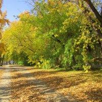 Золотаюшка осень . :: Мила Бовкун