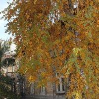 Осень дома :: Наталья Золотых-Сибирская