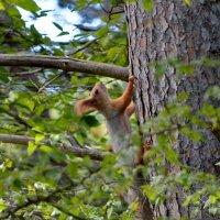 Встреча в лесу :: Ольга Голубева