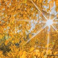 Осень за окном_2 :: Олег Мокрушев