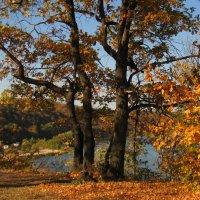 В парке. :: Лена Минакова