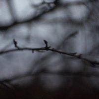 природа :: Анастасия Тихонова