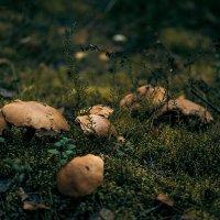 Грибочки как листики :: Nina Zhafirova