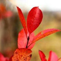 Краски осени :: Дмитрий Арсеньев