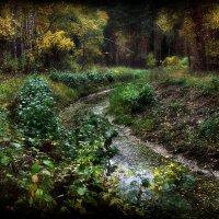 Утро в осеннем лесу... :: Андрей Войцехов