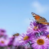 бабочка и пчела :: Андрей Рогаткин