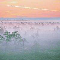 Туманное утро Югры. :: Алексей Хаустов