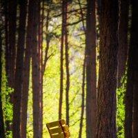 Скамейка в лесу :: Ирина Яздан Мехр