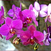 Бурное цветение. :: Любовь Чунарёва