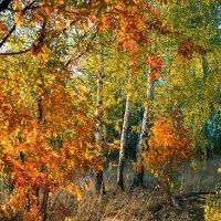 Октябрьский лес :: Женя Лузгин