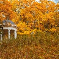 золотая осень :: Екатерина Рябцева