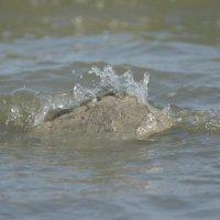 нашла вода на камень :: Sergey Tkachev