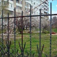 Весну не удержать! :: Нина Корешкова