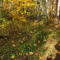 Сливаюсь с Природой (автопортрет) - IMG_2217 :: Андрей Лукьянов