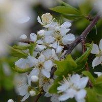 весна :: Juliya Gapchuk