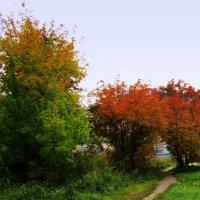 Осенние краски . :: Мила Бовкун