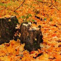 Осенний ковер :: Эркин Ташматов