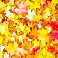 Краски осени :: Елизавета Егорова