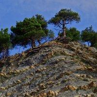 Тернистый путь деревьев :: Валерий Дворников