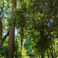 Тропа в ботаническом саду :: Андрей Гриничев