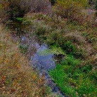 Ручей в осеннем лесу :: Владимир Нев