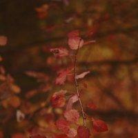 Что такое осень?это... :: Анна Кузнецова