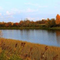 Разноцветная осень. :: Galina S*